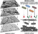 Natural Microbial Communities Can Be Manipulated by Artificially Constructed Biofilms