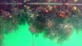 "More Biofouling ""Casualties"" to be Expected"